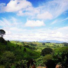 【haru_3020】さんのInstagramをピンしています。 《2010 AUSTRALIA  #australia #cairns #forest #tree #backpacker #travel #trip #sky #nature #green #オーストラリア #ケアンズ #バックパッカー #木 #森 #木が好き #旅 #植林 #緑 #自然》