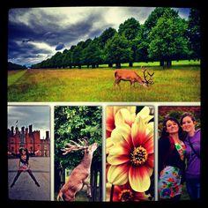 #hamptoncourt #goodtimes #stag #beautiful #spring