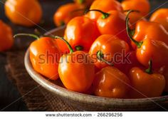 Chile Pepper Fotos, imágenes y retratos en stock   Shutterstock