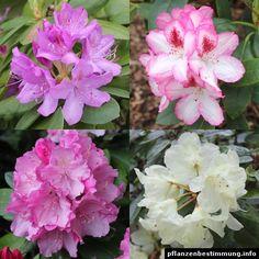 Fantastisch Blau Blühende Pflanzen Und Blumen Bestimmen