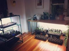 photos of the Victory Garden's office where they have seeds growing all over the place. I particularly love them growing under the desk – what a smart use of space!