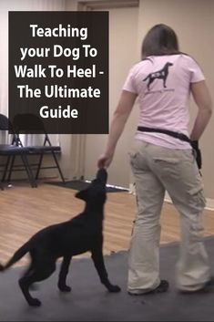 Obedience Training -  Walking To Heel