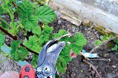Pruning Shears, Garden Tools, Gardening Scissors, Yard Tools