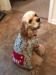 cocker spaniel in pajamas