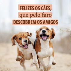 #mensagenscomamor #cães #amigos #frases #amor #animais