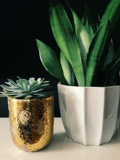 Potted Plants #plants #interiordesign #realestate