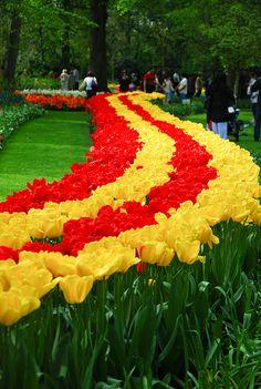 Tulip Lane, Keukenhof Flower Garden, Netherlands
