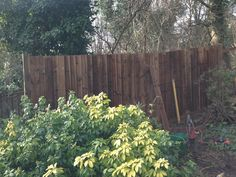 Garden Fencing in North London - Fence Repairs Highgate Garden Fencing, Garden Landscaping, Fence, North London, Feather, Outdoor Structures, Landscape, Board, Pictures