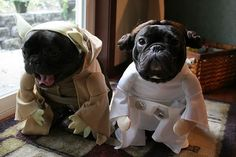 French Bulldog Worldwide :: View topic - Dog Costumes