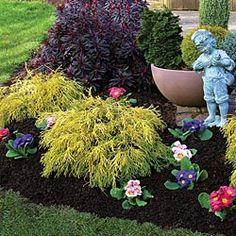 Golden Mop, or golden thread false cypress - would be pretty next to royal purple smokebush