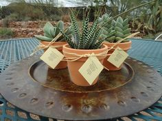 """Items similar to 36 Succulent Plant Wedding Favors in 3"""" Terracotta Pots with Raffia and Hang Tags on Etsy. , via Etsy."""