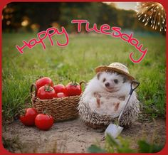 Tuesday, San, Bird, Wedding, Animals, Quotes, Morning Sayings, Valentines Day Weddings, Quotations