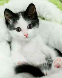 Nice kitty.