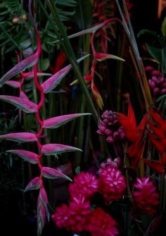 dark and moody summer tropical colours