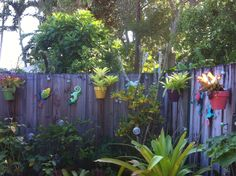 Hanging bromeliads with colorful pots on a fence hung with hangapot flower pot hangers from one of our Florida customers...Great color!