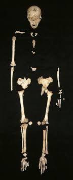 homo floresiensis:En 2003, en yacimientos en la cueva de Liang Bua, se descubrió un esqueleto subfósil, datado en 18 000 años, designado como LB1, muy completo excepto por los huesos del brazo, que todavía no se habían encontrado.
