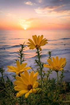 Yellow flowers with the sun and the sea in the background