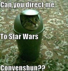 Cat R2D2