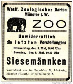 Original-Werbung/ Anzeige 1938 - ZOO MÜNSTER / SIESEMÄNNKEN / REISEBÜRO LÜCKERTZ…