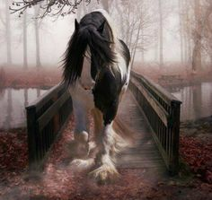 One of my favorite horses Gypsy Vanner All The Pretty Horses, Beautiful Horses, Animals Beautiful, Horse Photos, Horse Pictures, Yorkies, Shire Horse, Gypsy Horse, Into The West
