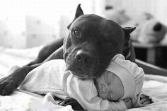 Pitbull and baby sleeping together