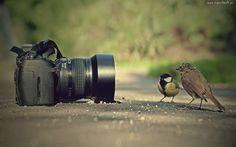 Aparat, Fotograficzny, Ptaki