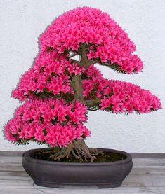 AD-Amazing-Bonsai-Trees-14.jpg (700×824)