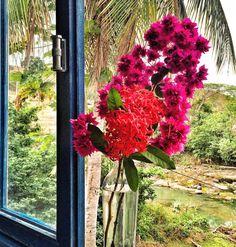uma garrafa de vidro  com flores colhidas na hora já fazem o charme do dia! Buganvílias rosas lindas