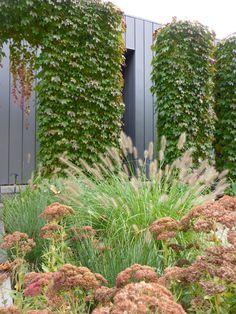 Designed by Renata Fairhall Garden Designs
