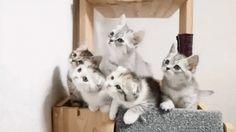 Fairy tales : They're sooooo cute !!