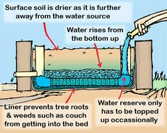 From the Bottom Up - A DIY Guide to Wicking Beds - Verge Permaculture Wicking Garden Bed, Wicking Beds, Aquaponics System, Hydroponics, Aquaponics Greenhouse, Aquaponics Plants, Diy Greenhouse, Organic Gardening, Gardening Tips
