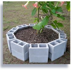 This is the circular raised cinder block bed with soil and brugmansia added.