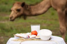 Life on the QCamel farm as captured by Dan Wood for the Beerenberg Provenance Project