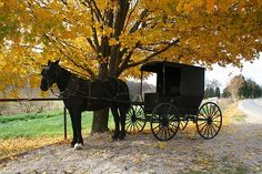 Horse and buggy under autumn tree, near Salem, Indiana