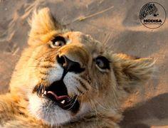 Sirga cub, Modisa Wildlife Project