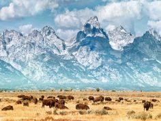 The 50 Most Beautiful Places in America: Grand Teton National Park Grand Teton National Park, Yellowstone National Park, National Parks, Places To Travel, Places To See, Travel Destinations, Beautiful Places In America, Teton Mountains, Rocky Mountains
