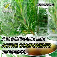 The Common Active Components of Herbs Herbal Remedies, Home Remedies, Natural Remedies, Natural Herbs, Natural Healing, Natural Medicine, Herbal Medicine, Healthy Herbs, Growing Herbs