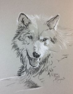 Gray Wolf for 02/26/2015   11 x 9 charcoal  available through www.lynnehurdbryant.com  SOLD
