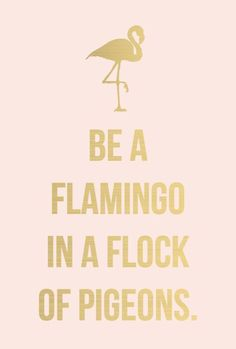 Be a flamingo in a flock of pigeons.                                                                                                                                                                                 More