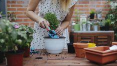 Planten verpotten, wanneer moet je dat doen? Lees snel al onze handige tips om het maximum uit jouw groene favorieten te halen. Houseplants, Sweet Home, Herbs, Nature, Dragon Flies, Naturaleza, House Beautiful, Indoor House Plants, Herb