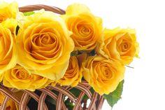 Flowers that Symbolize Friendship..