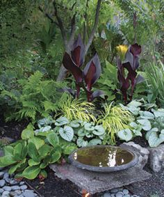 Stone bowl/birdbath plus dramatic planting.