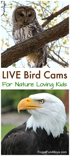 LIVE Bird Cams to Watch - Hawks, eagles, owls. Great science activity for spring during nesting season! Science Activities For Kids, Kindergarten Activities, Stem Activities, Preschool Prep, Science Videos, Preschool Curriculum, Funny Bird, Best Kids Watches, Tree Study