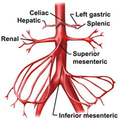 Diagnostic and Interventional Angiography