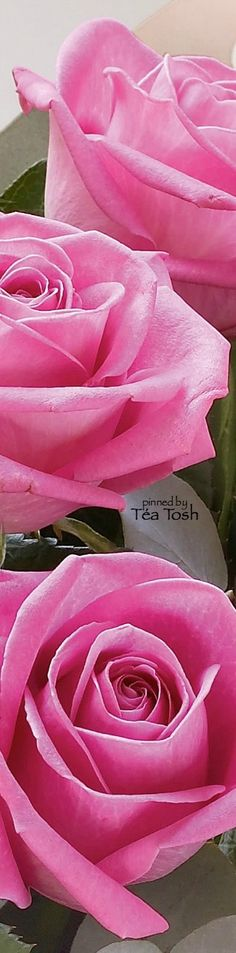 ❇Téa Tosh❇ Heavenly Pink Rose Bouquet