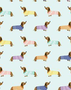 Dachshund Dog Wallpaper, Iphone Background Wallpaper, Wallpaper Ideas, Dachshund Art, Daschund, Image Deco, Whatsapp Wallpaper, Weenie Dogs, Dog Illustration