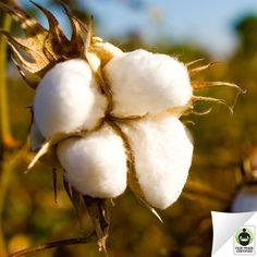 Repin if you knew that #cotton is one of the most widely used natural fibers worldwide. By choosing #FairTrade, you're supporting a better future for cotton producing communities around the world.