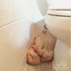 Teh hoomin let wun rippp Oh teh hoomanitty! - LOLcats is the best place to find and submit funny cat memes and other silly cat materials to share with the world. We find the funny cats that make you LOL so that you don't have to. I Love Cats, Crazy Cats, Cute Cats, Funny Animals, Cute Animals, Orange Cats, Sleepy Cat, Cat Sleeping, Ginger Cats