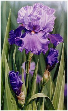 watercolor iris paintings   magnet