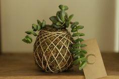 Succulent kokedama #succulent #green #art #kokedama #design #handmade #gardening #flower #nature #shop #gift